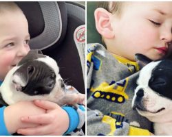 After Surviving Brain Surgery, His Mom Got Him A Puppy Who's Just Like Him