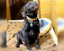 Shelter Puppy Wants A Home So Bad, He Smiles Wide Whenever There's A Visitor