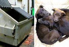 Despicable Owner Tosses Newborn Puppies In Dumpster, Dying Puppies Cry For Help
