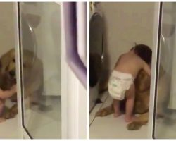 Diapered Toddler Comforts 'Frightened' Golden Retriever During Thunderstorm