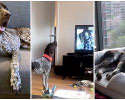 Dog Stops In His Tracks To Sing 'Law & Order SVU' Song Whenever It Comes On