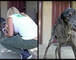 Dog's Owner Thought She Died Two Years Ago But Rescuers Found Her Living Alone In The Mountains