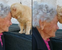 Woman Reunites With Her Cat 4 Years Later After An Earthquake Separated Them