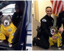 Cops Help Dying Stray Pit Bull Complete His Bucket List Before It's Too Late