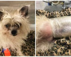 Left With No Other Option, Vets Use Cling Wrap To Keep Dog Alive
