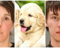 Dognappers Break Into Breeder's Home & Snatch 6 Golden Retriever Pups