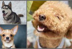 10 Healthiest Dog Breeds
