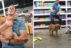 Blind Homeless Puppy Is Taken To Pet Store And Given Everything He Touches