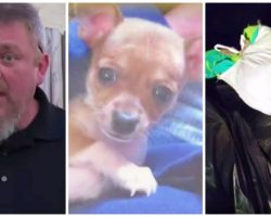 Animal Control Officer Shoots Chihuahua Hit By Car To Save The County Money