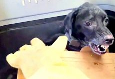 Constant Abuse Made This Dog So Aggressive, He Became Terrified Of Human Touch