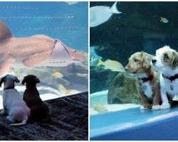 Shelter Puppies Take Field Trip To Aquarium & Have Whole Place To Themselves