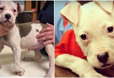 """""""Crooked Puppy"""" Left Roadside Craved Acceptance, He Received A Great Deal More"""
