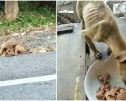 """Roadside Stray"" Picked Up By Angel, Eyes Grow Wide As He Sees First Meal"