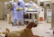 Dog Waits Nervously And Patiently For His Zoo Friend To Get Through Surgery