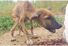 """""""Skin & Bones"""" Puppy Devours Food While Talking & Wagging His Tiny Tail"""