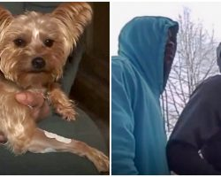 Robbers Threaten To Shoot Girl, Yorkie Protects Her & Takes 2 Bullets For Her