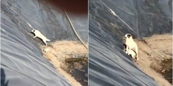 Men Stare Down While She Tried To Climb Up Steep Pit With Her Baby