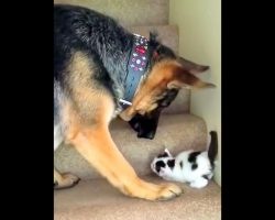 "Mom Warns Dog To ""Stay Away"" From The New Kitten, But The Dog Refuses To Listen"