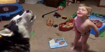 Toddler And His Talkative Husky Have Daily Conversations With Each Other