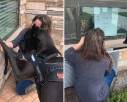 Therapy Dog Continues Visits With Quarantined Seniors Through Their Windows