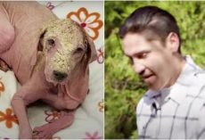Man Saved Bald Dog While Four-Wheeling, Sees Her A Yr Later & Won't Hold Back