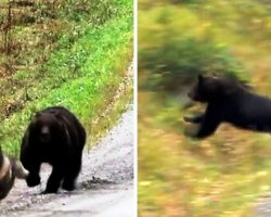 Dog Being Chased By Angry Bear Sees No Escape, Panicked Owners Freeze In Fear