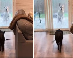 Dog Goes Bonkers With Excitement Whenever His Pig Friend Comes Over To Play