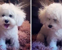 """Dog Has Bad Hair Day & Looks Defeated After Mom Gives Her An """"Amateur Haircut"""""""