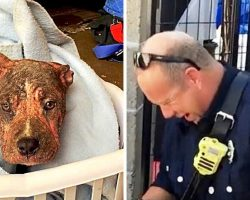 Fireman Who Rescued Abused Dying Puppy Left Speechless When He Sees Her Again