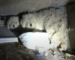 """Dogs Trapped In Sewer For Weeks See No Way Out, Panic When """"Strangers"""" Approach"""