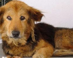 Family Abandoned Their 15-Year-Old Dog Because They 'Didn't Have Time For Her'