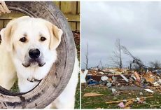 Heroic Dog Perishes In Tornado After Saving His Family As House Collapsed
