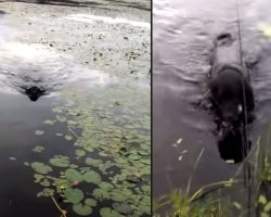 Man's Dog Goes In Water To Save A Life, Returns To Him With It In His Mouth