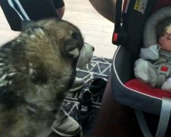 Dog Sees Newborn Baby For First Time & Plunges His Mouth Into The Baby Carrier