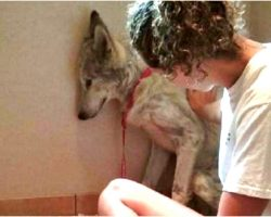 """Shy Stray Roaming Streets Isn't Even """"A Dog"""" And Rescuers Still Fight For Him"""