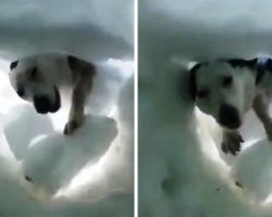 Man Buried In Snow Sends A Rescue Call, Sees Paws Digging Through Moments Later