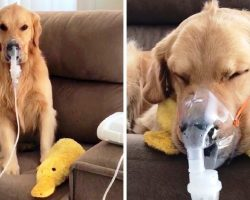 Sick Dog Diagnosed With Kennel Cough Patiently Obeys Mom & Wears Breathing Mask
