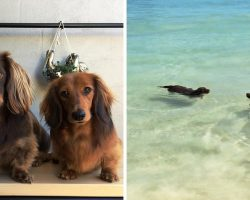 """Mom Sees Tiny Dachshunds Attempting """"Synchronized Swimming"""" & Starts Recording"""