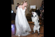Dog Wants To Celebrate Mom's Wedding Day, So He Jumps In For A Thrilling Dance