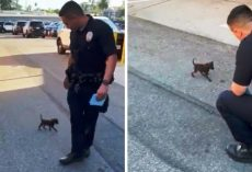Tiny Puppy Stumbling On Road After Being Dumped Chases Cop & Begs To Be Noticed