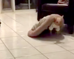 Dog Sold On Craigslist Would Walk Around With Bed On Her Back In Order To Feel Safe
