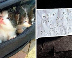 Owner Splits Newborn Kittens From Mama Cat & Dumps Them In Suitcase With A Note