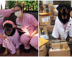 Therapy Rottweiler Delivers 'Hero Healing Kits' To ICU Nurses On Front Lines
