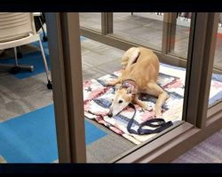Lonely Dog Waits For Kids To Read To Him At Library But Nobody Came