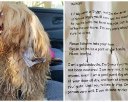 Man Goes Out For Groceries, Discovered 'Disheveled' Dog With Note On Collar