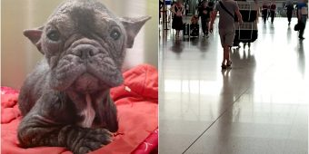 """Lil Dog Pulled From Meat Truck, Waited At The Airport For Her """"Human Angel"""""""