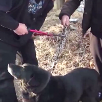 After 15 Years On A Chain, Neglected Dog Is Finally Being Cut Free