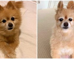 Woman Attempts To Groom Dog Herself, Accidentally Turns Him Into A Mini Alpaca