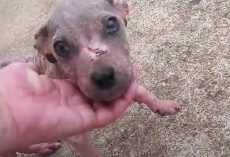 Puppy Dumped In A Cemetery Loses His Scabs And Finds A Personality