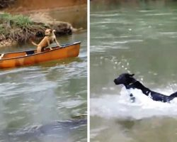 Dog Hears His Siblings Screaming From A Drifting Canoe & Jumps Into The Water